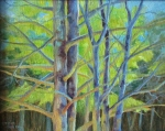 Maine Pine